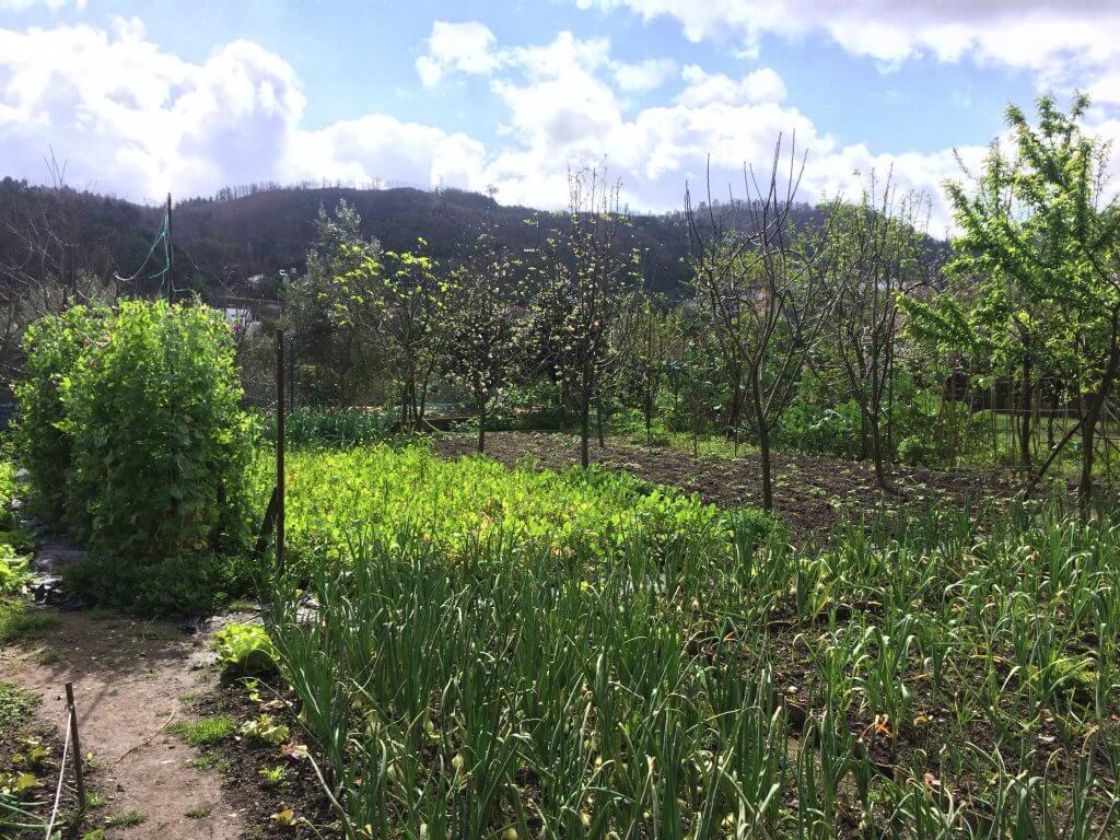 organic-farming-garden