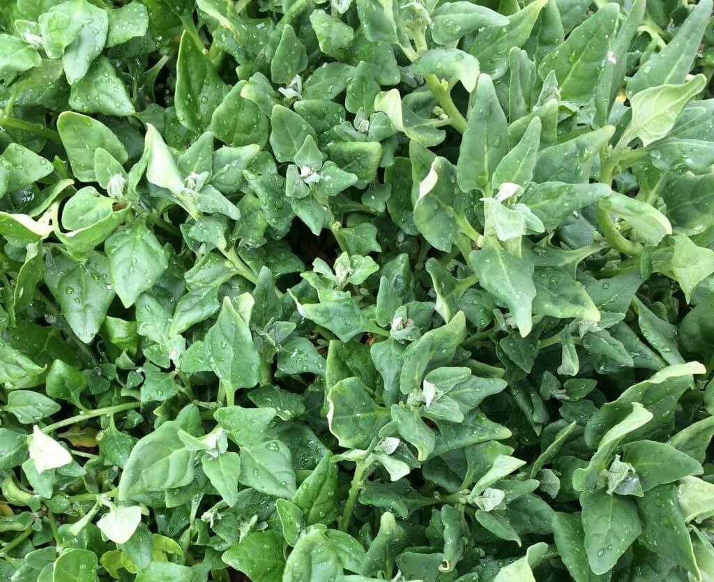 organic-farming-greens3