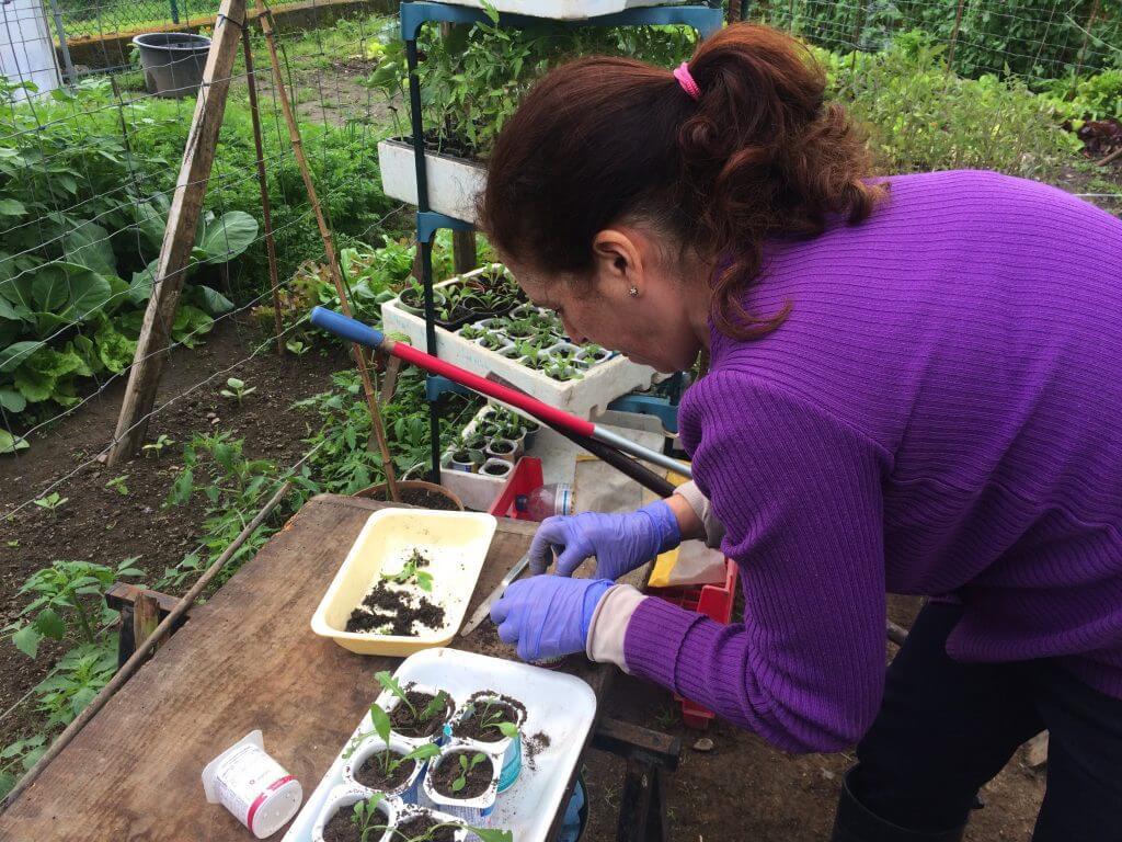 organic-farming-seedlings