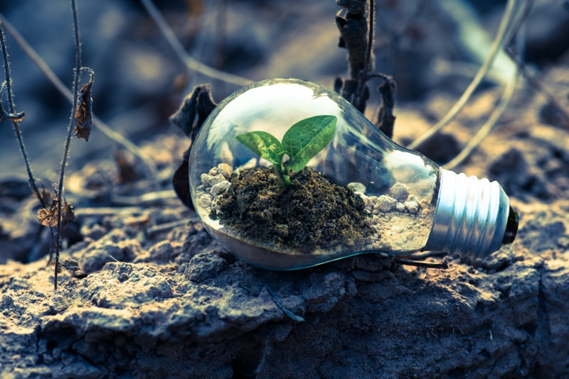 5 green business ideas